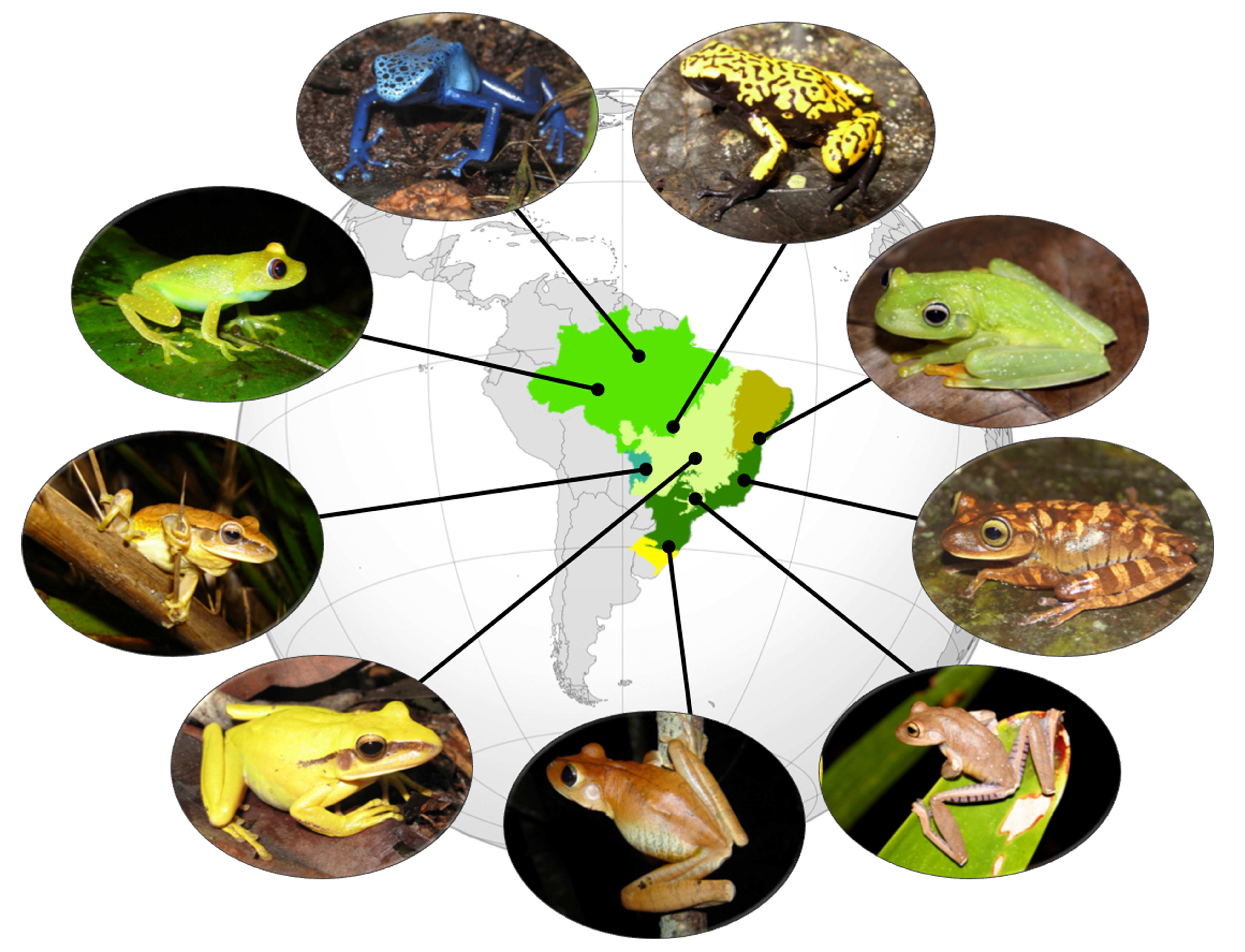 a study of the taxonomy of frogs Etymology and taxonomy the name frog derives from old english frogga, abbreviated to frox, forsc, and frosc,  other researchers, while agreeing with the main thrust of this study.